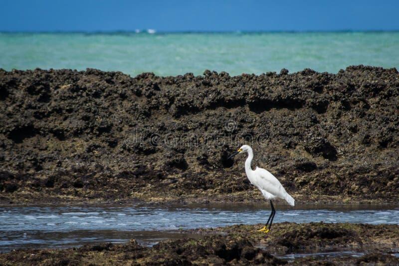 Miasta Brazylia, Recife - obrazy royalty free