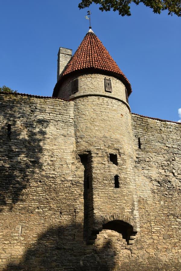Miasto ściana w starym miasteczku Tallinn zdjęcia royalty free