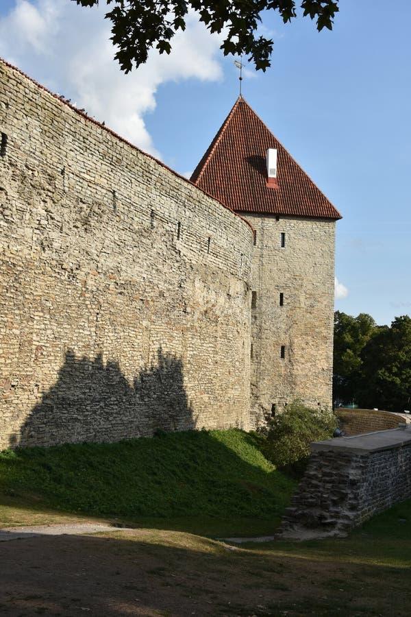 Miasto ściana w starym miasteczku Tallinn zdjęcia stock