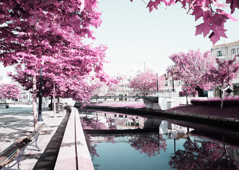 Miasto Aveiro, Portugalia zdjęcia royalty free