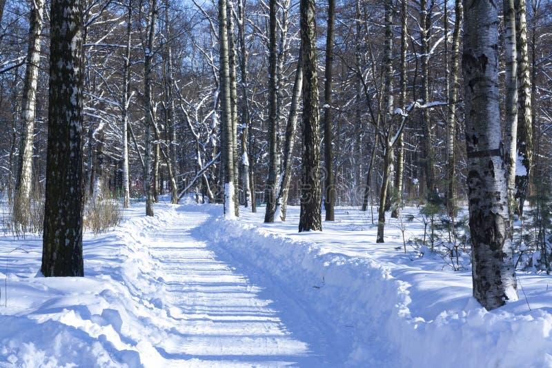 miasto blisko kolejowych drogowych połysk snow słońce zima drewno Droga z brzozami rano do sunny zimy zdjęcie royalty free