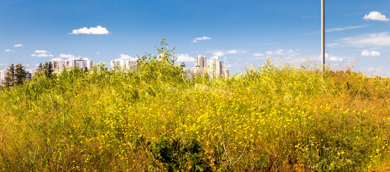 Miasto budynków okwitnięcia kwiatów kwitnący pole fotografia stock