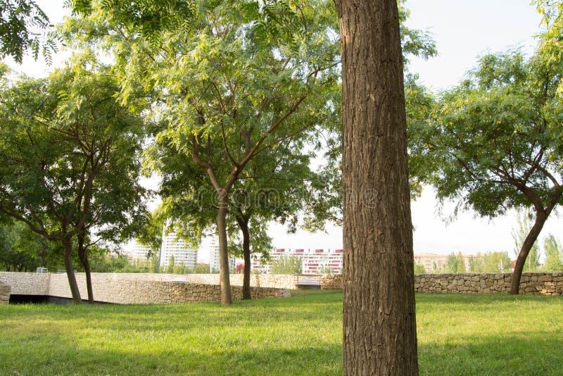 Miasto chuje za miastowym ogródem obrazy royalty free
