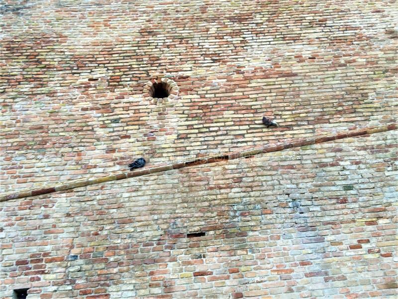 Miasto Corinaldo w prowincji Ancona, region Marche, Włochy Starożytna ściana, fortyfikacja i gołębie fotografia royalty free