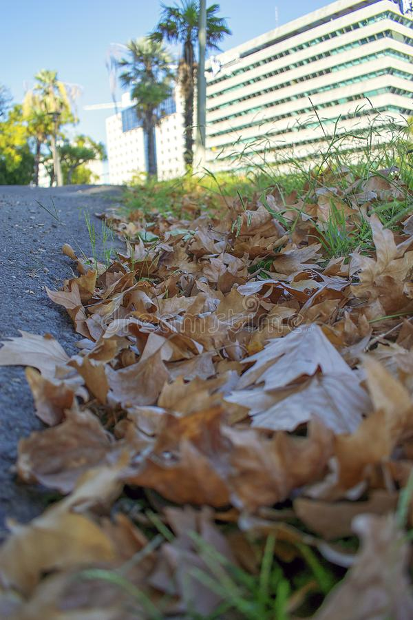 Miasto jesieni scena fotografia stock