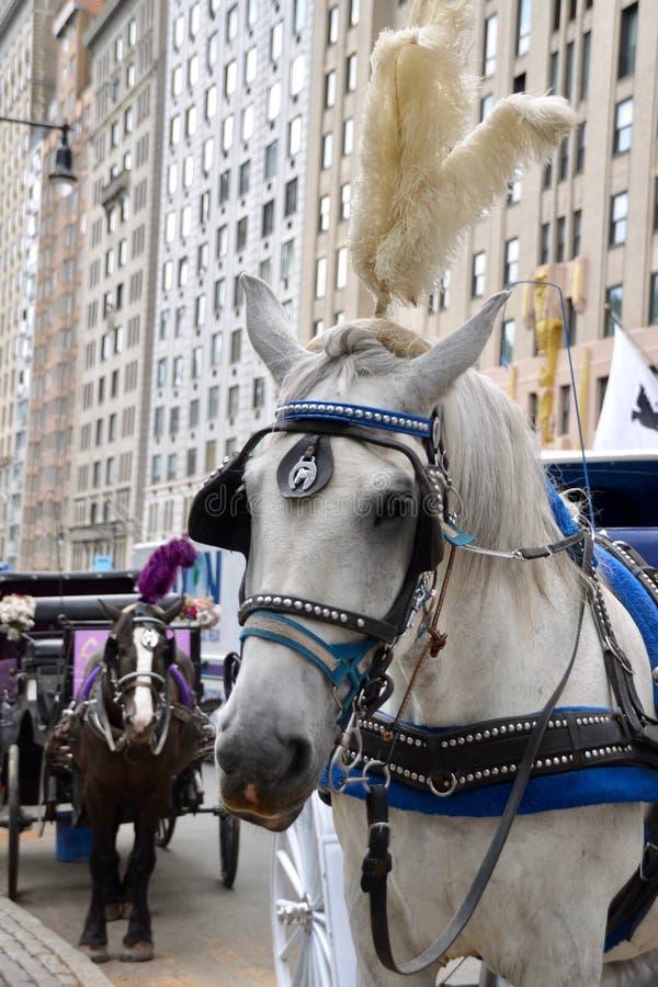 Miasto Nowy Jork Kareciany koń fotografia royalty free