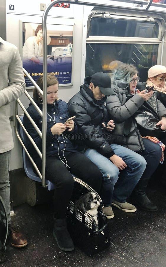 Miasto Nowy Jork ludzi i zwierzęcia domowego zwierzęcia psa wagon metra MTA pociągu NYC Jeździecki Miastowy styl życia obraz stock