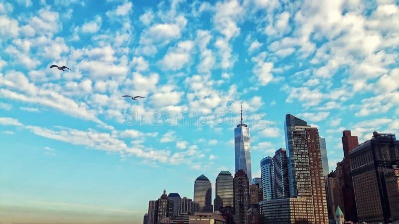 Miasto Nowy Jork Manhattan linii horyzontu seagulls zmierzchu wschód słońca obraz royalty free