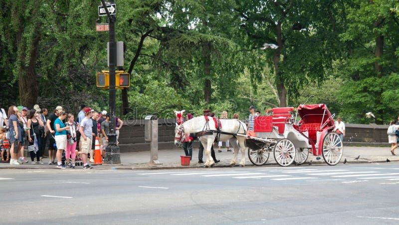 Miasto Nowy Jork, NY, usa 05 28 2016 czerwień, bielu koń przy krawężnikiem na zachodzie i fracht i Jedziemy w central park zdjęcia stock