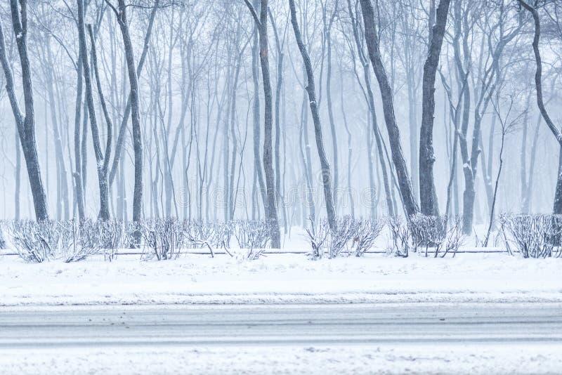 Miasto park w zimie Grodzki rekreacyjny teren podczas opad śniegu Zimy prognoza pogody Ciężki śnieżyca i miecielica obrazy royalty free