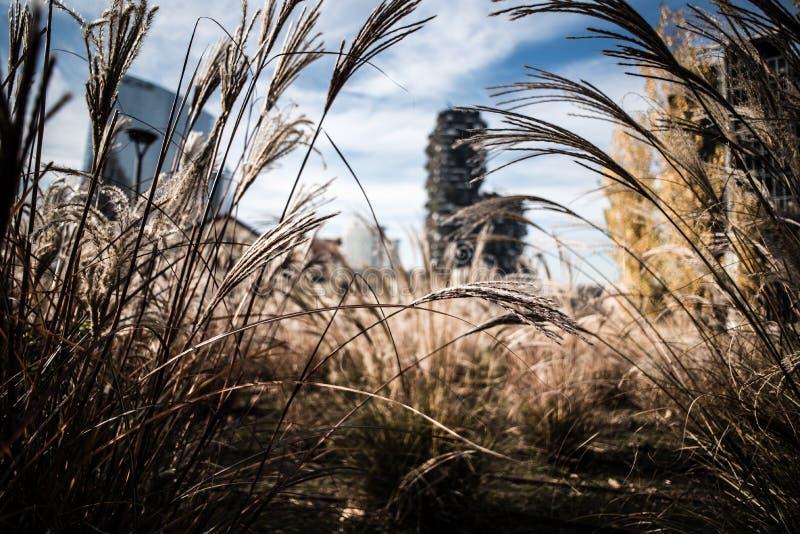 Miasto roślinność i porośle w parku, drapacze chmur na backgr zdjęcie royalty free