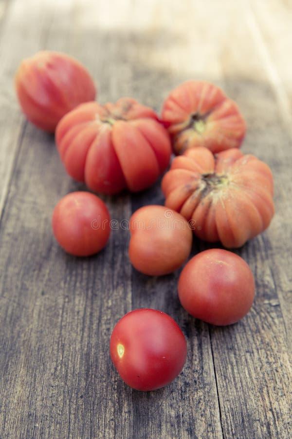 Miastowego ogrodnictwa życiorys pomidor fotografia stock