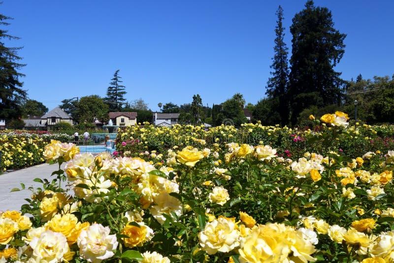Miastowy ogród różany, San José, CA obraz royalty free
