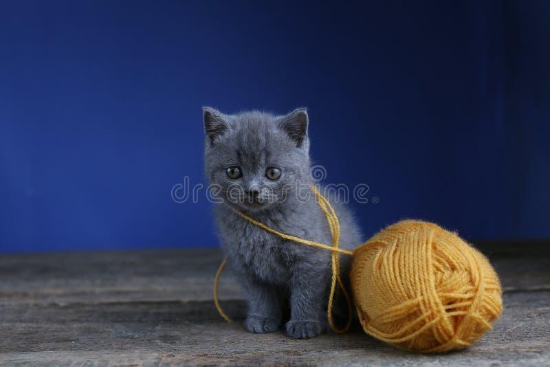 Miauler de chaton et boule de fil Plancher, recherchant images stock