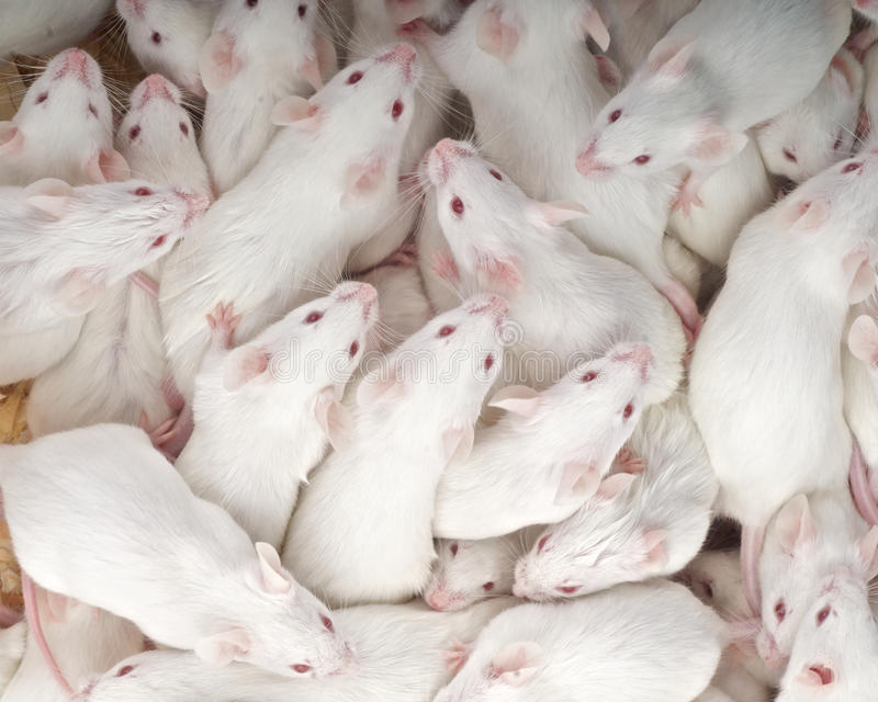 Download Mice Stock Photography - Image: 24793002