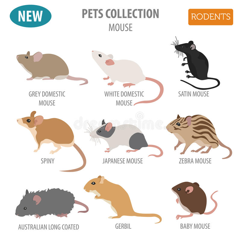 Rat Breeds Icon Set Flat Style Isolated On White  Pet