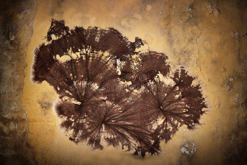Micelio del fungo della cantina sulla parete fotografie stock libere da diritti