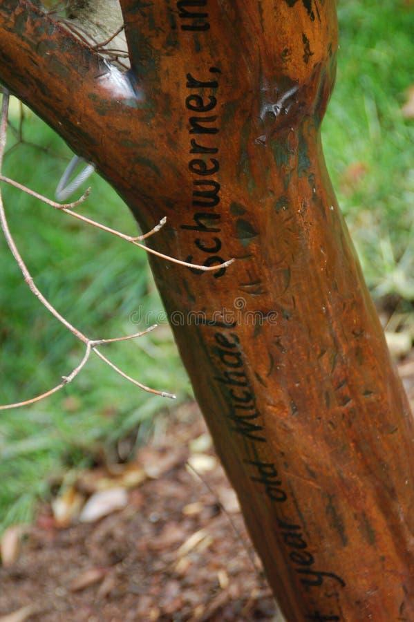 Michael Schwerner: De Herdenkingsboom de Universitaire, vroeger Westelijke Universiteit van Miami van de vrijheidszomer voor Vrou royalty-vrije stock foto