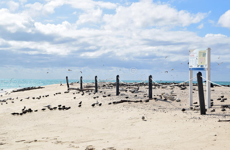 Michaelmas cay z piękną świetną białą piaska, turkusu błękitne wody pokazywać tutaj z &, podpisuje obrazy royalty free
