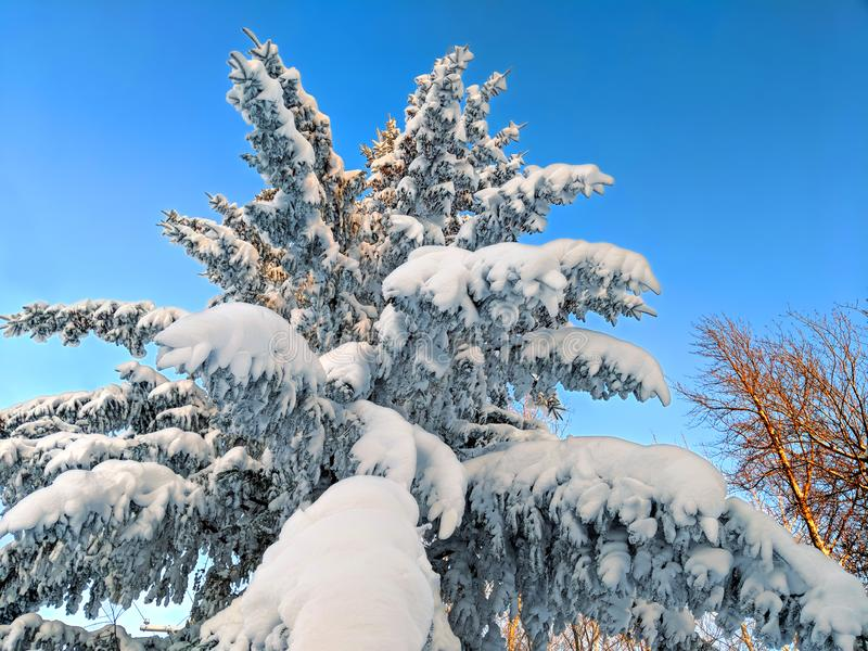 Michigan opad śniegu sosny las obraz royalty free
