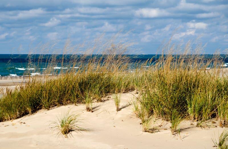 Michigansee und Strandhafer lizenzfreies stockbild
