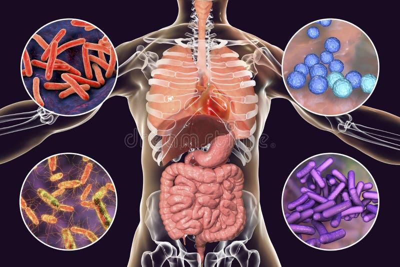 Micróbios patogênicos patogênicos humanos dos micróbios, os respiratórios e os entéricos ilustração royalty free