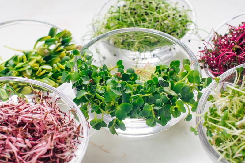 Micro brotos dos verdes do rabanete e outros brotos nas bacias de vidro fotos de stock royalty free