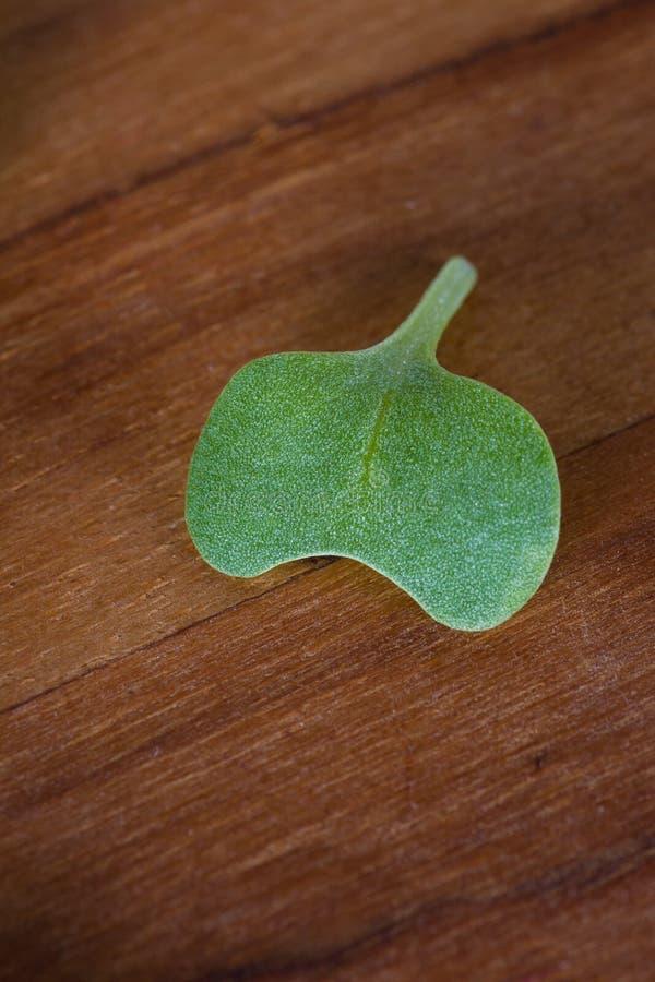Micro close-up verde imagens de stock