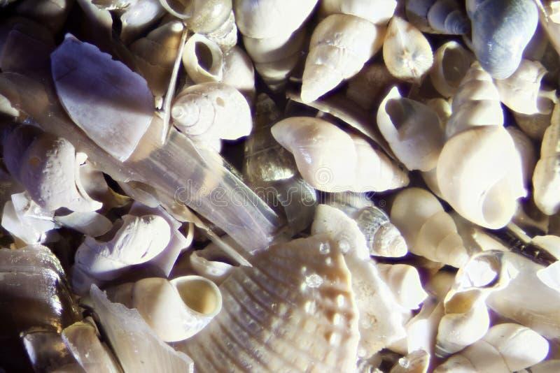 Micro- Foto van Overzees Shell Sand stock afbeelding