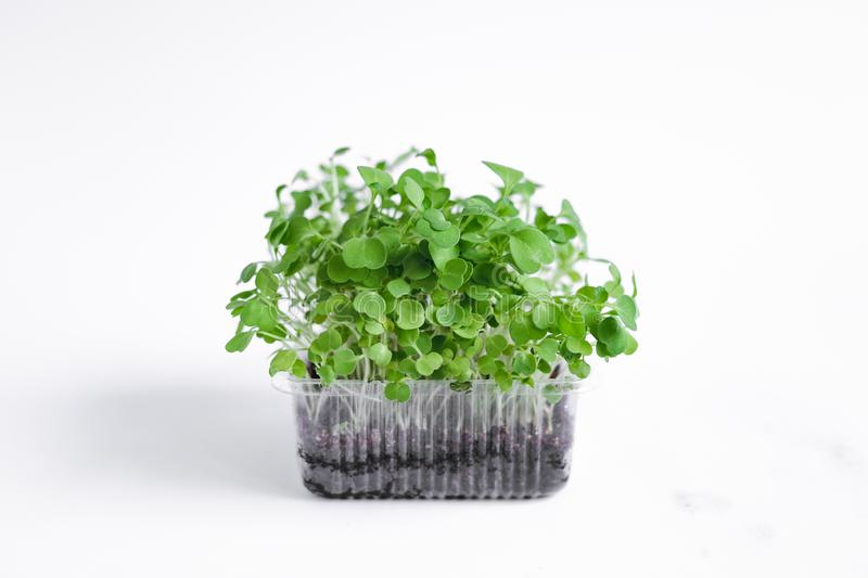 Micro Green Vegetables in a cup on a white background royalty free stock photos