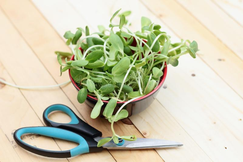 Micro green, vegetables stock images