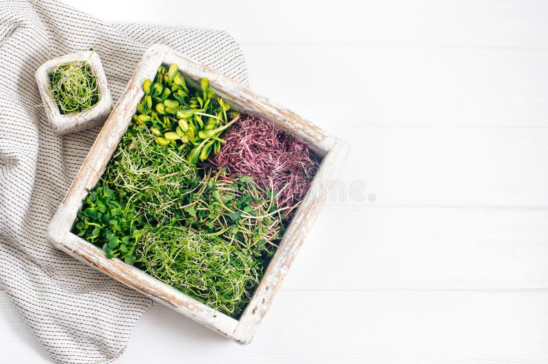 Micro greens of radish, amaranth, mustard, beetroot and onion in wooden box on white wooden background stock photos
