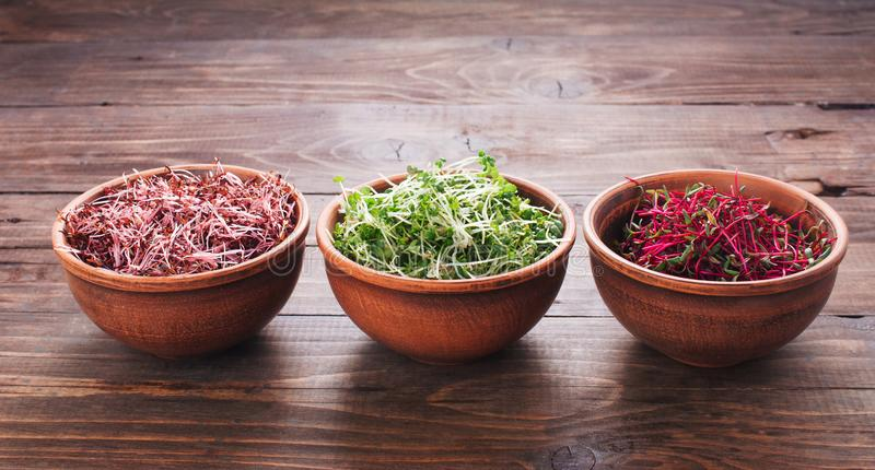 Micro greens sprouts of amaranth, mustard and beet in ceramic bowls stock images