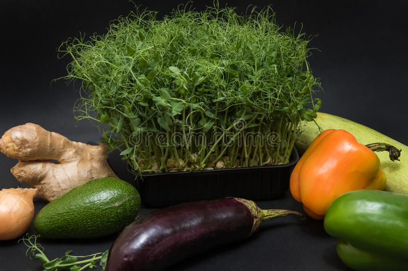 Micro greens sprouts stock photography