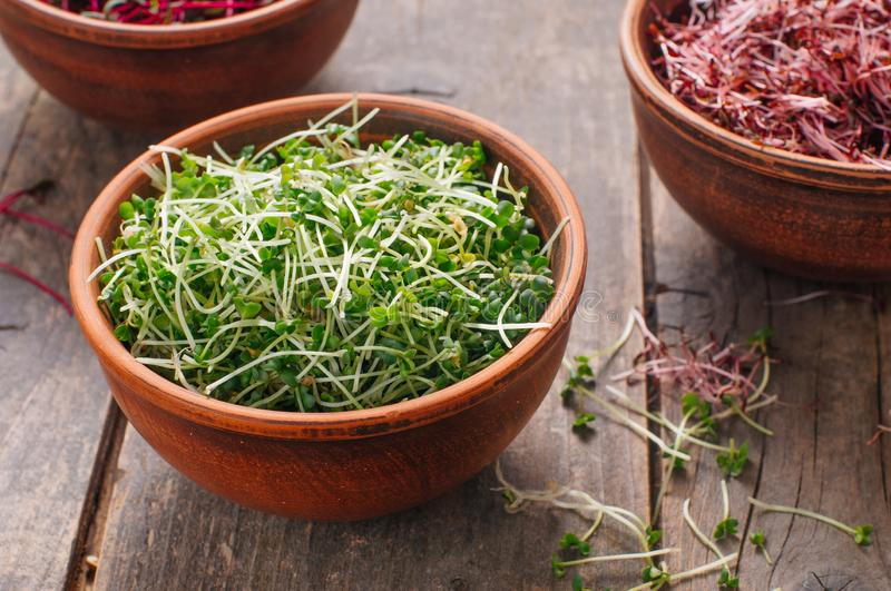 Micro greens sprouts of mustard in ceramic bowl on rustic wooden background. Selective focus on mustard sprouts stock images
