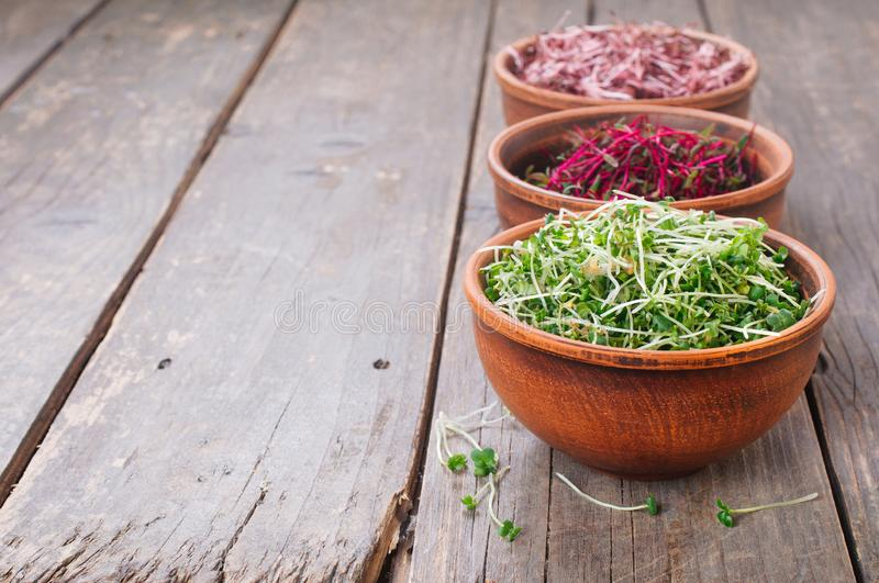 Micro greens sprouts of mustard in ceramic bowls. Micro greens sprouts of mustard, amaranth and beet in ceramic bowls on rustic wooden background with blank stock image