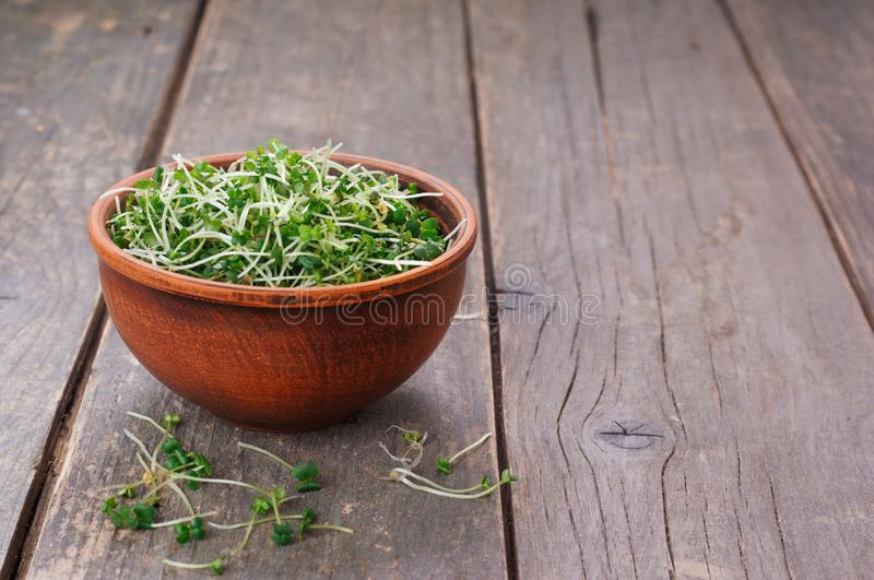 Micro greens sprouts of mustard on rustic wooden background. Micro greens sprouts of mustard in ceramic bowl on rustic wooden background with blank space for stock photos