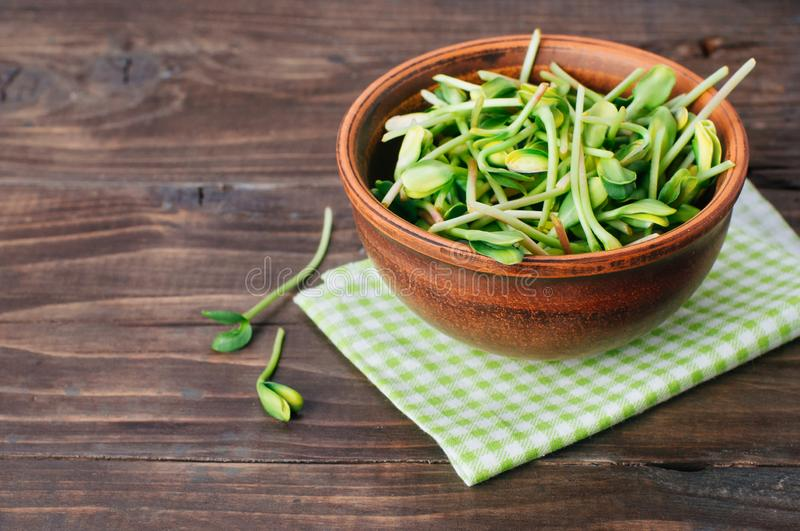 Micro greens sprouts of sunflower in ceramic bowl stock photography
