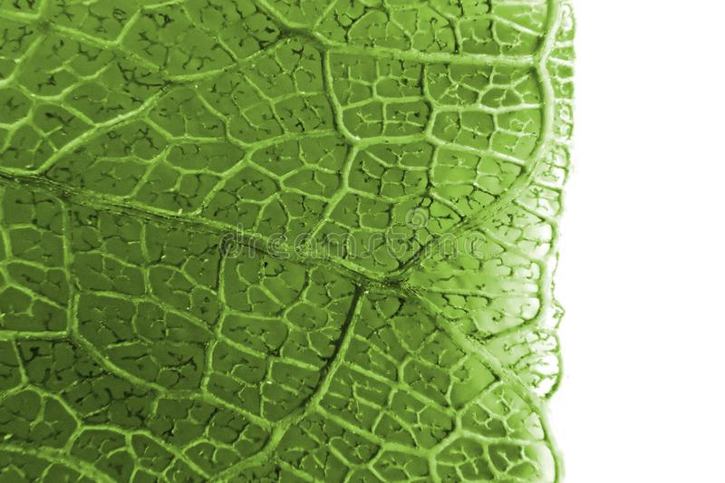 Micro photo of leaf texture. As nice background stock image