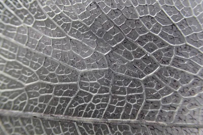 Micro photo of leaf texture. As nice background stock images