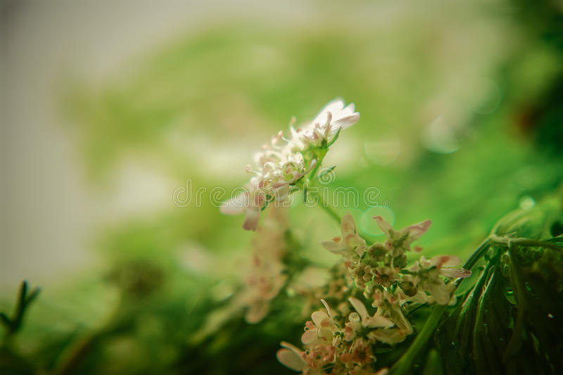 Micro-Photography royalty free stock photography