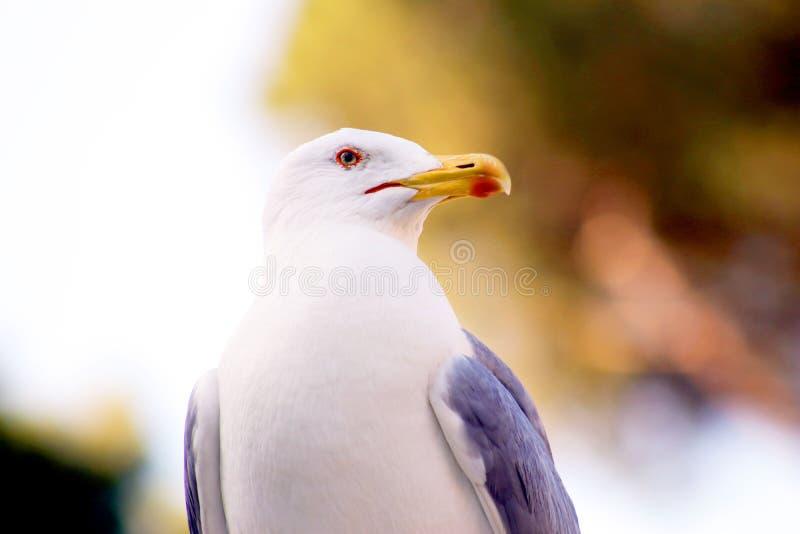 Micro Photography of White and Grey Bird stock photos