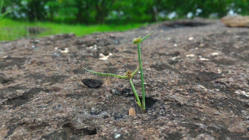 Micro- Pic van Gras stock afbeelding