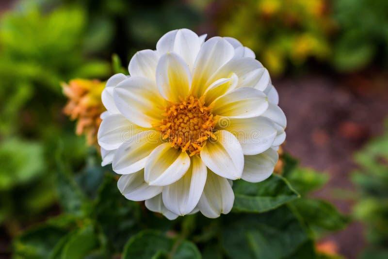 Micro tiro para uma flor redonda imagens de stock royalty free