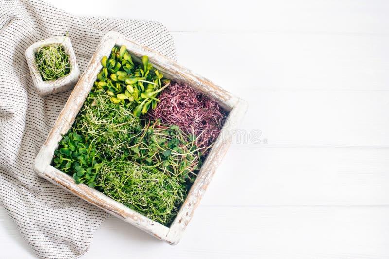 Micro verdes do rabanete, do amaranto, da mostarda, das beterrabas e da cebola na caixa de madeira no fundo de madeira branco fotos de stock