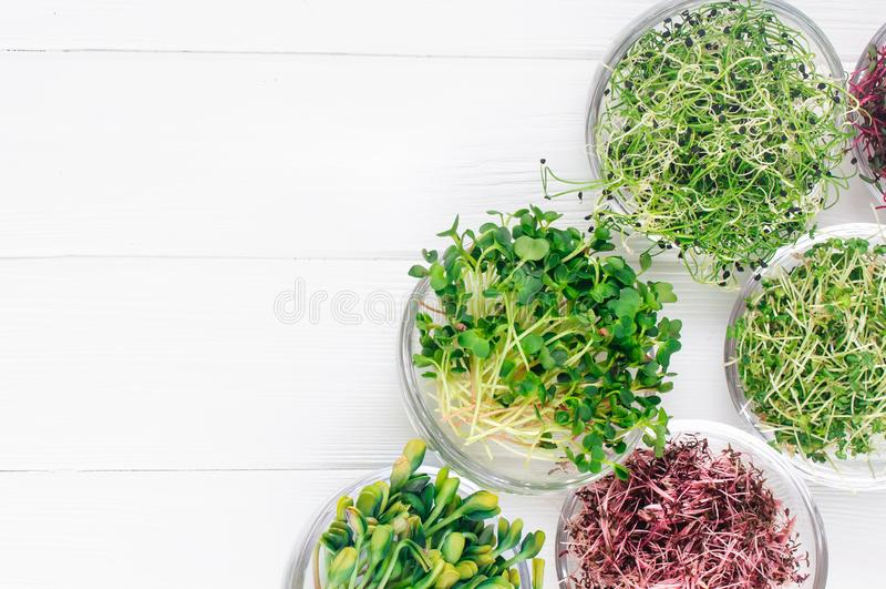 Micro verdes do rabanete, do amaranto, da mostarda, das beterrabas e da cebola nas bacias de vidro fotografia de stock
