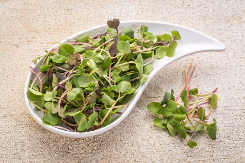 Micro verdes orgânicos fotografia de stock royalty free