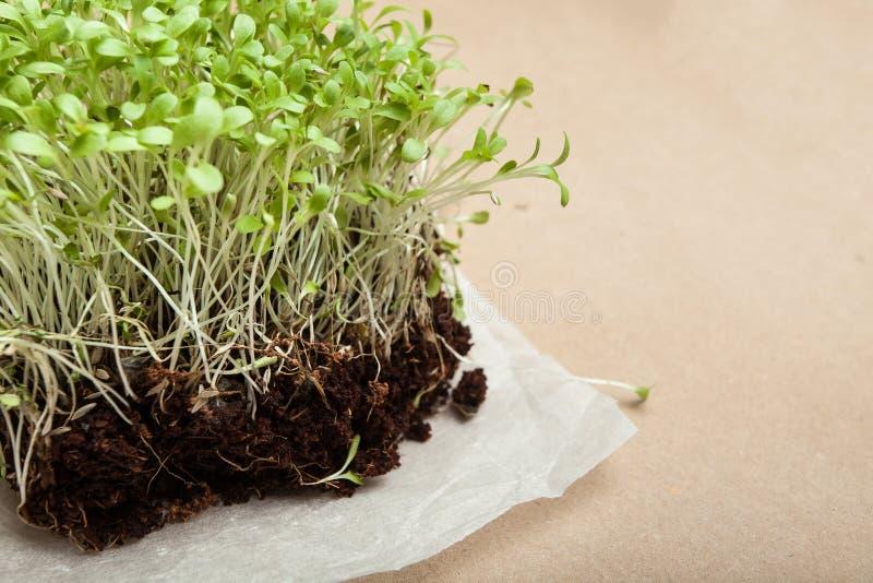 Micro-verdi di recente crescenti su un tovagliolo bianco detox Nutrizione adeguata fotografie stock libere da diritti