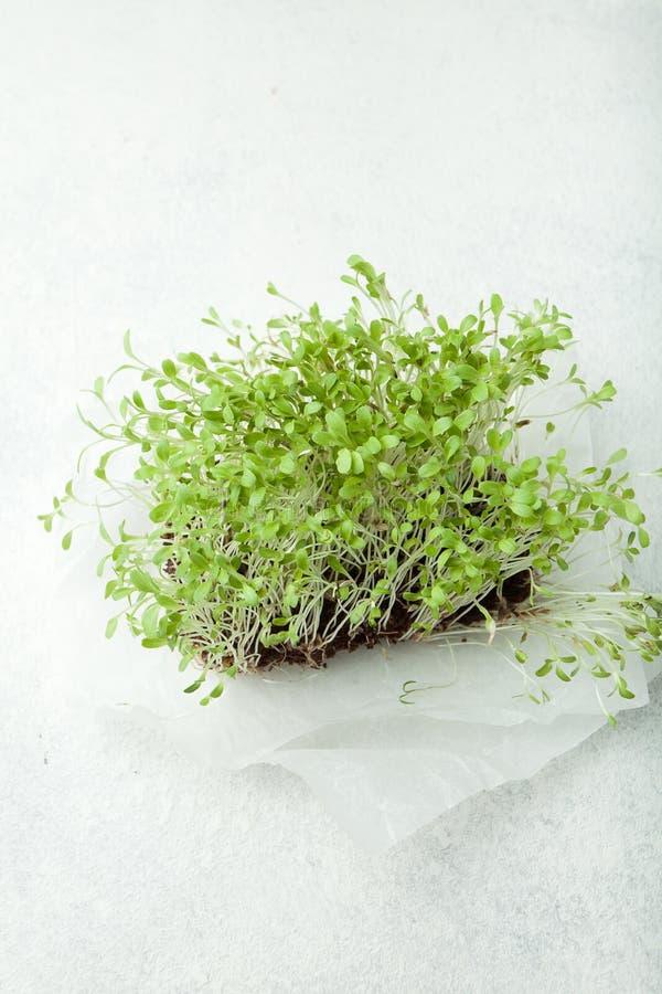 Micro-verts afin de détoxifier le corps, se débarassant des toxines, reconstituant le corps images stock