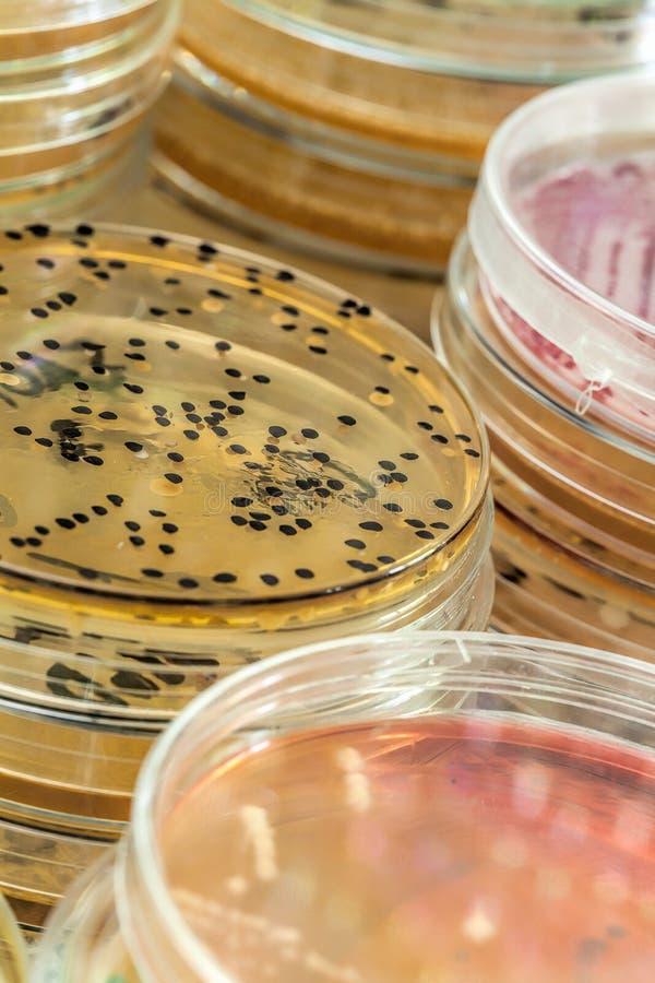 Microbacterias i mikroorganizmy fotografia royalty free